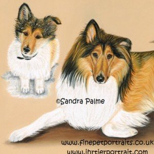 Rough Collie portrait pastel