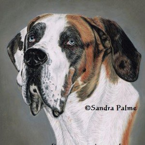 Great Dane dog portrait