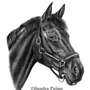 Hanoverian Horse drawing