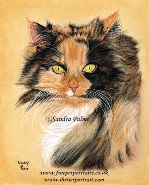 Cat Portrait Lucy