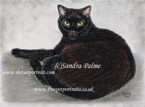 Black cat pastel pet portrait