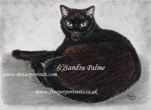 Black cat pastel pet portrait