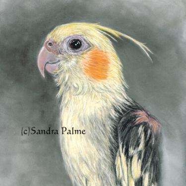Cockatiel Bird Portrait