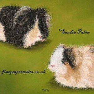 Guinea Pigs pastel portrait