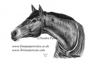 Horse portrait in charcoal