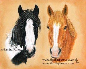 Horses heady study