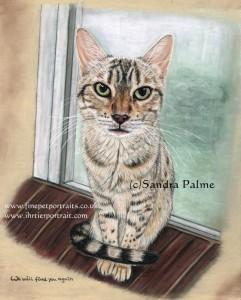 Bengal Cat Dakota  Portrait