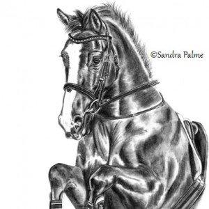 Irish Sport Horse charcoal