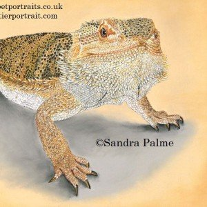Bearded Dragon pastel portrait