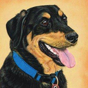 Labrador x Pastel Portrait