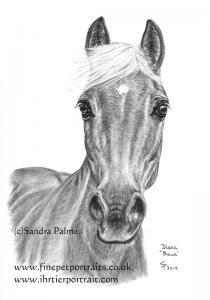 Haflinger horse mare Diana Maus charcoal portrait