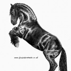 Friesian horse charcoal drawing