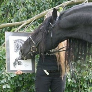 Friesian horse Dirk van de Jonker with portrait