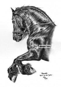 Friesian Horse charcoal drawing