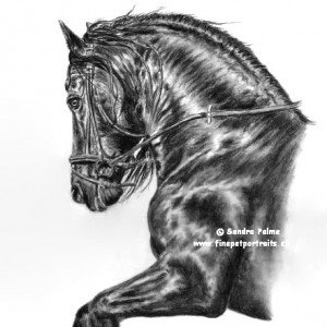 Friesian horse Stallion charcoal drawing