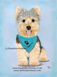 Yorkshire Terrier Kenny Portrait