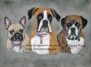 French Bulldog Boxers Dog Pastel Portrait