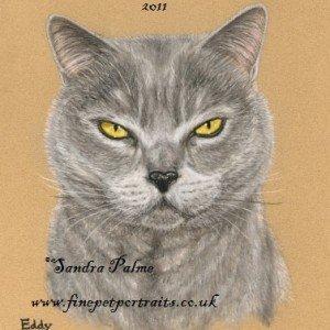 Chartreux Cat portrait