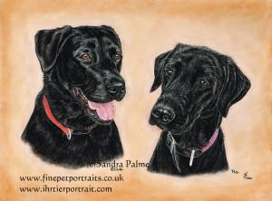 Black Labradors Ella and Tia Dog Portrait in Pastels