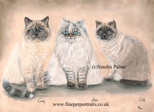 Exotic Shorthair cats portrait