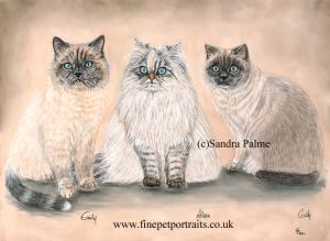 Exotic Shorthair cats Emily, Aileen and Cindy