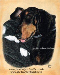 Dachshund Felix Portrait