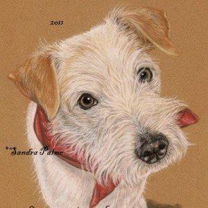 Kromfohrlaender Dog portrait