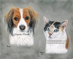 Kooiker Hondje Cat Portrait