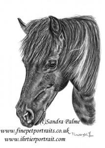 Shetland Pony Flowergirl Portrait