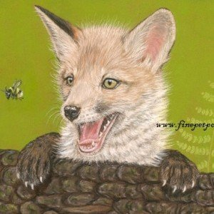 Fox cub pastel portrait