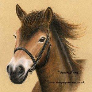 Exmoor Pony portrait