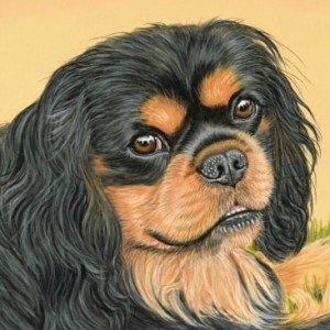 Cavalier King Charles Spaniel pastel portrait