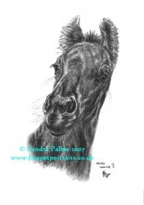 Friesian Foal - Charcoal