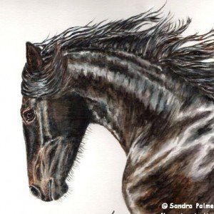 Friesian Mare Watercolour portrait
