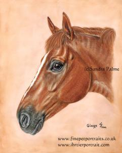 Chestnut gelding Ginge horse portrait