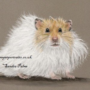 Teddy Bear Hamster drawing