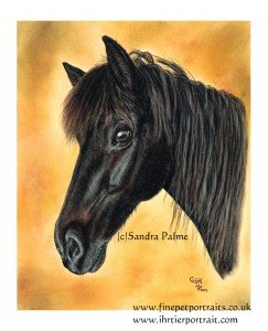 Icelandic Horse drawing