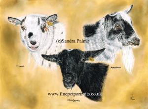 Goats Portrait