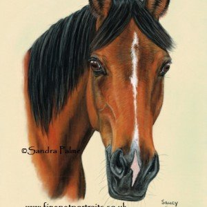 Arab Horse Portrait in pastels.