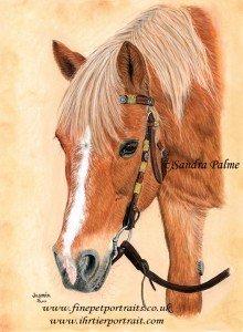 Haflinger Horse Portrait Jasmin