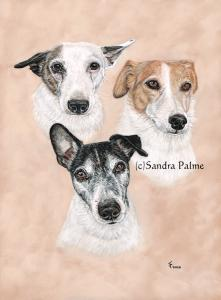 Jack Russell Terriers dog portrait Hardy Laurel Buzz