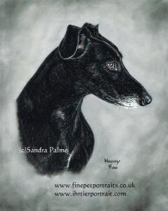 Greyhound Harvey Portrait