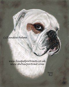 Dog Portrait Bulldog