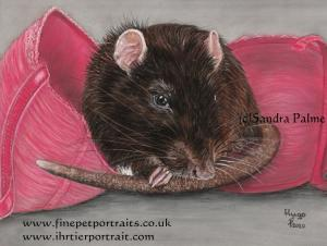 Pet Rat Hugo Portrait