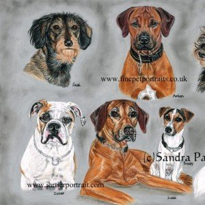 dog portrait montage