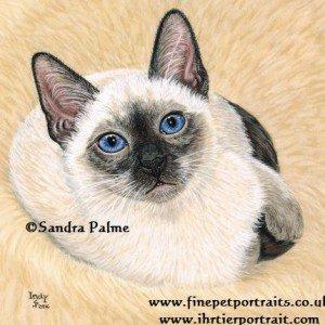 Thai cat kitten portrait