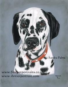Dalmatian Kemon Dog Portrait