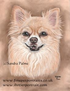 Chihuahua Kenzo dog portrait