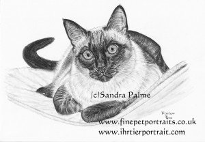 Thai Cat drawing