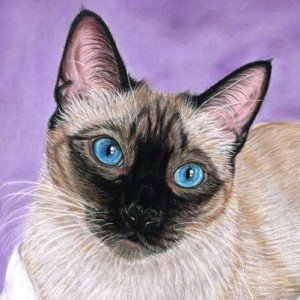 Thai Cat pastel portrait